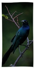 Male Boat-tailed Grackle Beach Sheet by Cyndy Doty