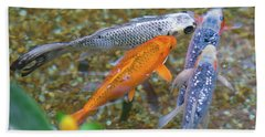 Fish Fighting For Food Beach Towel