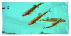 Fish School In Turquoise Lake - Plitvice Lakes National Park, Croatia Beach Towel