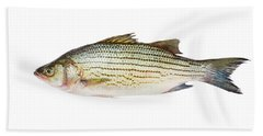 Fish Beach Sheet