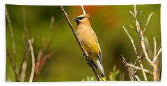 Fishercap Cedar Waxwing Beach Towel by Adam Jewell