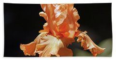Beach Towel featuring the photograph Flaming Floral by Deborah  Crew-Johnson
