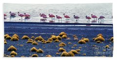 Beach Sheet featuring the photograph Flamingos At Torres Del Paine by Bernardo Galmarini