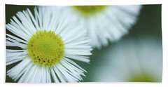 Fleabane Flowers Beach Sheet