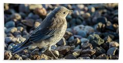 Fledgling Mountain Bluebird Beach Towel