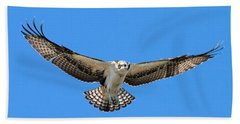 Beach Towel featuring the photograph Flight Practice Over The Nest by Debbie Stahre