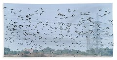 Flock Of Beautiful Migratory Lapwing Birds In Clear Winter Sky Beach Towel