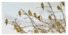 Flock Of Cedar Waxwings  Beach Towel