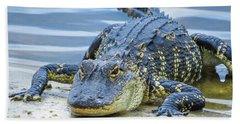 Florida Alligator Closeup Beach Towel