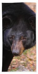 Florida Black Bear Beach Towel