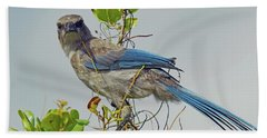Florida Juvie Scrub Jay Beach Towel