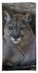 Florida Panther Beach Sheet