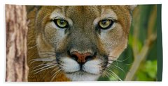 Beach Sheet featuring the photograph Florida Panther by Larry Nieland