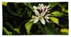 Flower Of The Lemon Tree Beach Towel