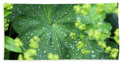 Flowering Lady's Mantle - Beach Towel