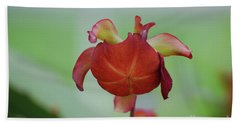 Flowering Red Adam's Pitcher Plant Beach Sheet