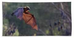 Flying Fox In Mid Air Beach Towel by Craig Dingle