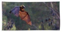 Flying Fox In Mid Air Beach Towel