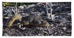 Squirrel Pprh Woodland Park Co Beach Towel