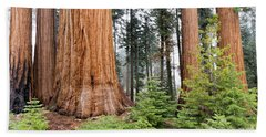 Beach Towel featuring the photograph Forest Growth by Peggy Hughes