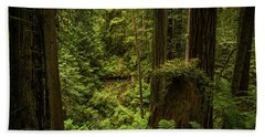 Forest Primeval Beach Towel