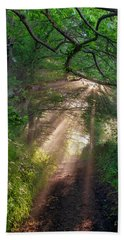 Beach Towel featuring the photograph Forest Trail by Fabrizio Troiani