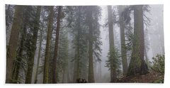 Beach Towel featuring the photograph Forest Walking Path by Peggy Hughes