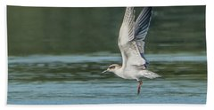 Forster's Tern 092017-5021-1cr Beach Towel