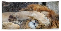 Fort Worth Zoo Sleepy Lion Beach Towel