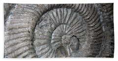 Fossil Spiral  Beach Towel by LeeAnn McLaneGoetz McLaneGoetzStudioLLCcom