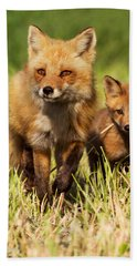 Fox Family Beach Towel by Mircea Costina Photography