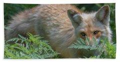 Fox In The Ferns Beach Sheet