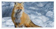 Fox On A Winter Afternoon Beach Sheet