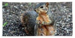 Fox Squirrel Breakfast Beach Towel