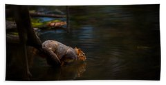Fox Squirrel Drinking Beach Towel