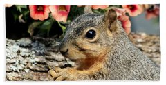 Fox Squirrel Portrait Beach Sheet