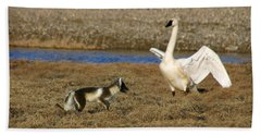 Fox Vs Tundra Swan Beach Towel