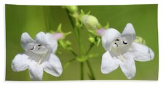 Foxglove Beardtongue Beach Sheet