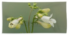 Foxglove Beardtongue Beach Towel