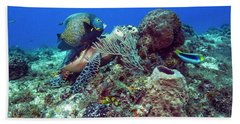 French Angelfish And The Green Turtle Beach Towel