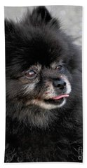 Beach Sheet featuring the photograph Fresh Dog by Debbie Stahre