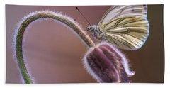 Fresh Pasque Flower And White Butterfly Beach Towel by Jaroslaw Blaminsky