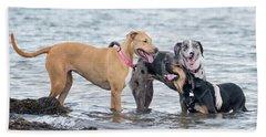 Friends Beach Towel by Stephanie Hayes
