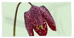 Fritillaria Meleagris - Green Background Beach Towel