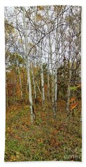 Frontenac State Park Birch Trees Beach Towel