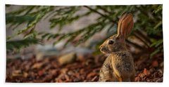 Beach Towel featuring the photograph Frontyard Bunny by Dan McManus