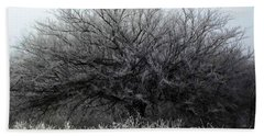 Beach Towel featuring the photograph Frosted Elm by Shelli Fitzpatrick