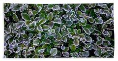 Frosty Hedgerow Beach Sheet