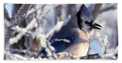 Frosty Morning Blue Jay Beach Towel