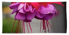 Fuchsia  Beach Sheet